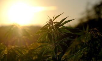 Top 10 Sites Accepting Blogs For The Hemp Guest Post Niche